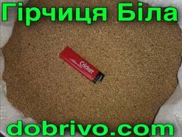 Горчица белая весовая (семена) 1 КГ