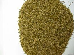 Горчица желтая, белая семена