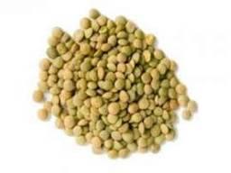 Семена гороха озимого от 100 кг