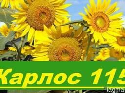 """Насіння соняшника """"Карлос 115"""" під євро-лайтинг"""
