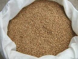 Гречка, Buckwheat, Крупа гречана, проділ