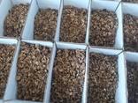 Грецкий орех (в скорлупе, очищенный вид). CEVIZ 2020 - фото 4