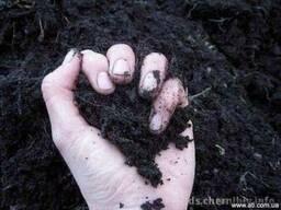 Грунт,чернозем,торф,растительный грунт,песок,Киев,купить,дос