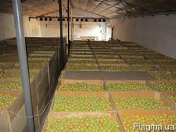 Холодильная камера для хранения овощей (по всей Украине)