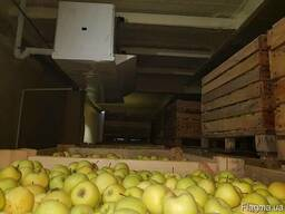 Холодильная камера для хранения яблок