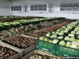 Холодильные камеры хранения фруктов и овощей.Крым.
