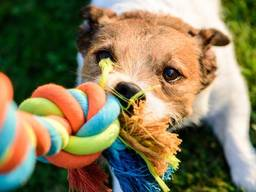 Игрушки для домашних животных. Канаты для собак и кошек