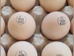 Инкубационное яйцо бройлер КОББ 500 маркированные, миражиров