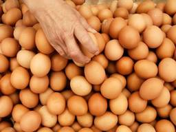 Інкубаційні яйця бройлера Кобб 500 из Европы