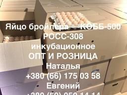 Інкубаційні яйця бройлерів, мясо-яєчні, яєчні, курячі, гусячі.