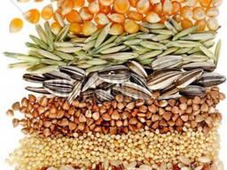 Ищем поставщиков зерновой культуры