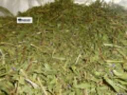 Иван чай(трава-лист)
