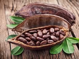 Какао бобы премиум фракция Гана Африка