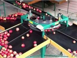 Калибратор для сортировки яблок по фракциям