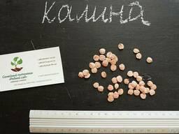 Калина обыкновенная семена 10шт(семечки)для саженцев насіння - фото 2