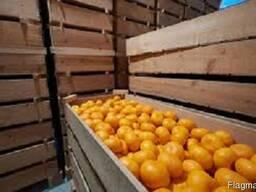 Камера хранения мандарина