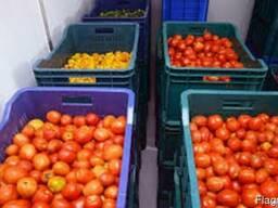 Камера хранения помидоров