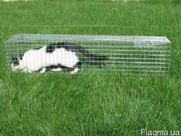 Котоловка. Клетка. Капкан. Ловушка. Живоловушка для кота
