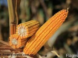 Карифолс кукуруза купить, Карифолс цена
