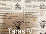 Карника Зингер пчеломатки - фото 1