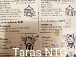 Карника Зингер пчеломатки