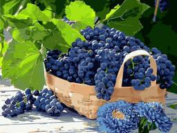 "Картина по номерам. Натюрморт ""Виноград в корзине"". .."