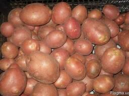 Картофель Беллароза 1 репродукция сетка 3кг.