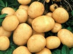 Картофель Гранада 1 репродукция сетка 3кг.