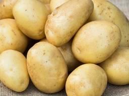 Картофель Лаперла 1 репродукция сетка 3кг.