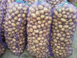 Продам картофель свежий продовольственный Казахстан