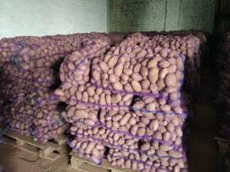 Картофель оптом / Export