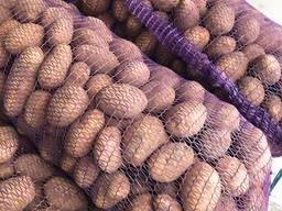 Картофель оптом из Беларуси (Export) - фото 3
