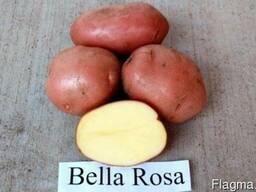 Картофель оптом, от 10 тонн