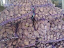 Картофель продовольственный Тирас