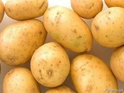 Картофель Ривьера 1 репродукция сетка 3кг.
