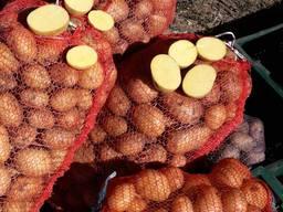 Картофель Ривьера. Картопля. Картошка!!!