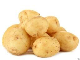 Картофель столовый мытый отборный фасованный элитных сортов