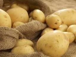 Картопля насіннєва Коннект