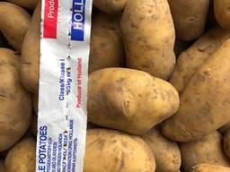 Картопля з Голандії