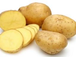 Картошка оптом картофель сортов: Манифест, Скарб, Бриз