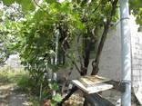 Кирпичный дом на участке 9 соток с садом в 4км от телевышки - фото 2