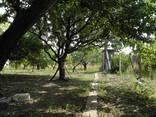 Кирпичный дом на участке 9 соток с садом в 4км от телевышки - фото 10