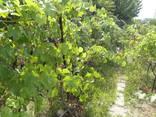 Кирпичный дом на участке 9 соток с садом в 4км от телевышки - фото 11