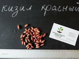 Кизил красный семена (10 штук) для выращивания саженцев - фото 2