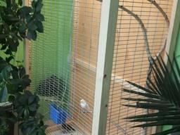 Клетка вольер для мелкой домашней птички попугая, кенора и других на подставке.