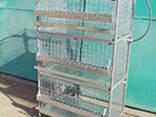 Клетки куриные клетки для кур несушек и бройлеров - фото 1