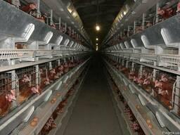 Клеточное оборудов. для выращивания промышленного стада кур