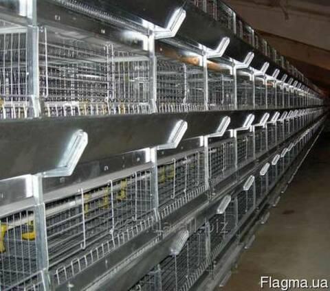 Клеточное оборудование для молодняка кур-несушек