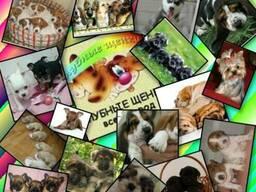Клубные щенки разных пород, Выставка собак