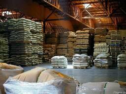 Кофе зеленый (необжаренный) Robusta Indonesia